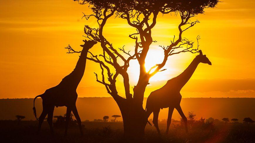 Kenia : Energia per la vita